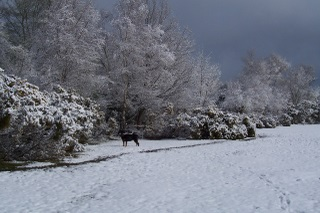 New Forest April 2008 snow with our late dog Tia
