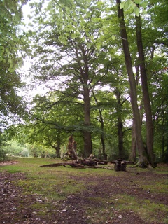 New Forest Woodland - played an important part during WW2