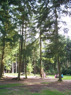 New Forest Bolderwood Picnic area
