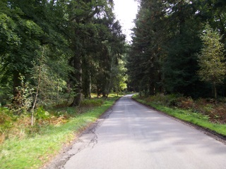 New Forest Bolderwood Drive