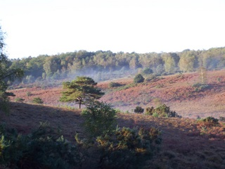 New Forest view across the Purlieu