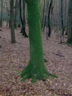 New Forest Knightwood Oak Wood