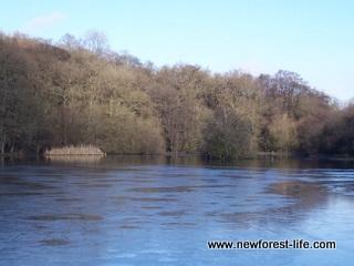 New Forest Eyeworth Pond Fritham