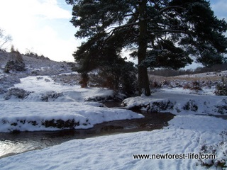 New Forest Winter at Hale Purlieu Stream
