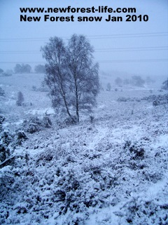 New Forest snow Jan 2010