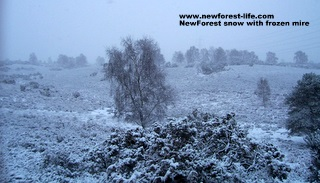 New Forest Purlieu Mire in the snow