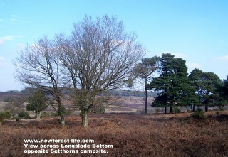 New Forest Setthorns view of the valley