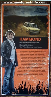New Forest Beaulieu-Top Gears Richard Hammond