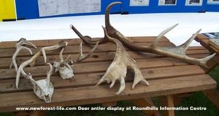 New Forest Roundhills info tent exhibits