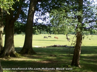 New Forest Hollands Wood Site looking to Balmer Lawn