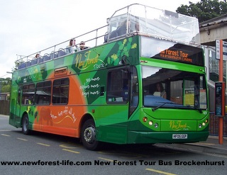 New Forest Siteseeing Tour Bus