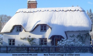 New Forest Thatched cottage