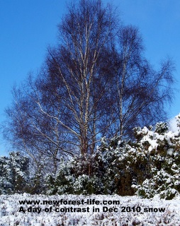 New Forest snows with clear blue sky
