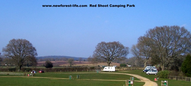 New Forest Red Shoot Camping Site