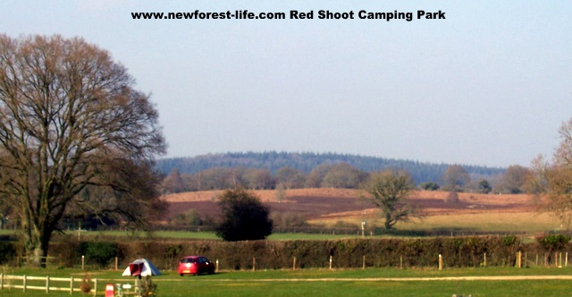 New Forest Red Shoot Site with Stunning views