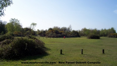 New Forest Ocknell Campsite view
