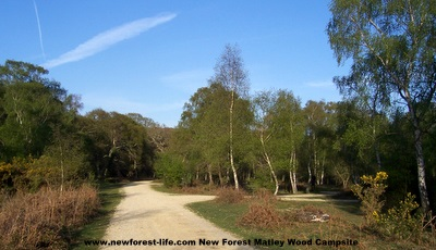 New Forest Matley Wood in 2011