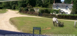 New Forest ponies grazing enroute