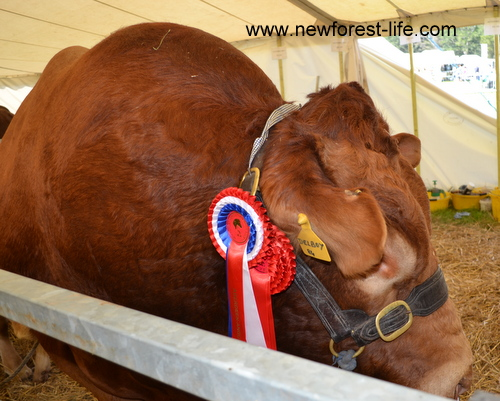 New Forest Show 201