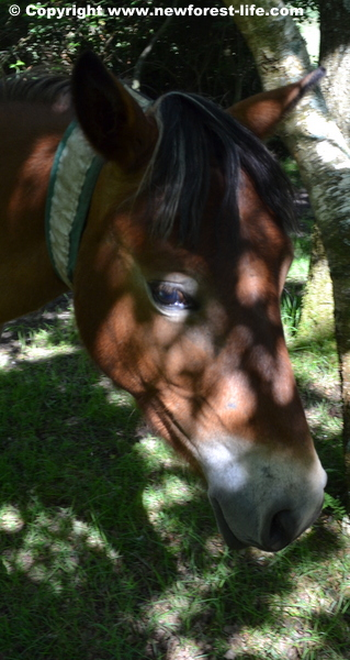 My new Forest pony goes back out on the forest