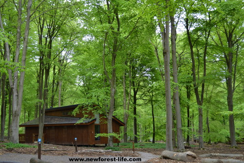 Forest cabins new forest cabins dog friendly for Croatan national forest cabins