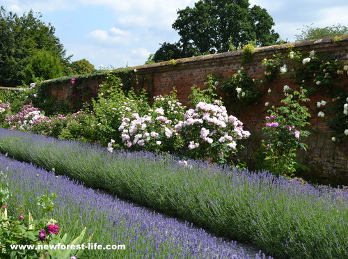 Mottisfont National Trust Rose Garden lavender borders