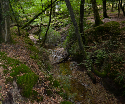New Forest ancient woodland stream.