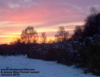 New Forest sunset in the snow