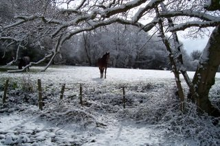 New Forest 2008 snow and pon