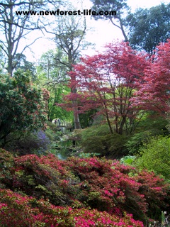 New Forest Exbury Gardens in the Spring