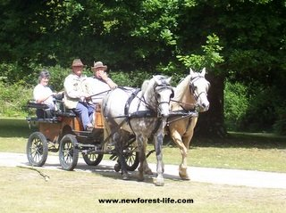 New Forest Ocknell-Pony & Trap is a local form of transport
