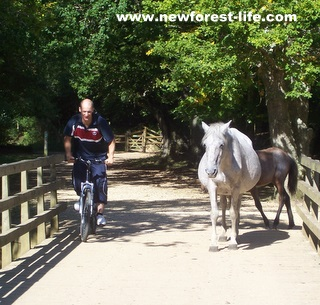 New Forest cyclist avoiding ponies at Oberwater bridge