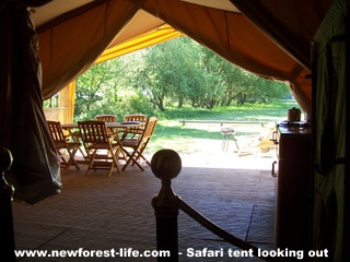 New Forest Safari Tent looking out