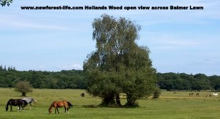 New Forest Hollands Wood Campsite view