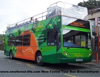 New Forest Tour Bus