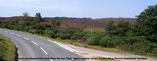 New Forest open heathland from top of bu
