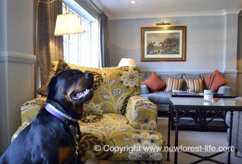 The Bell Inn dog friendly hotel at Bramshaw