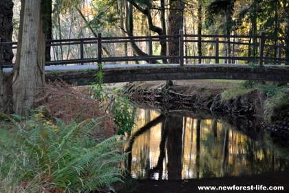 New Forest woodland near Blackwater Arboretum