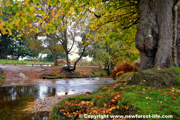 New Forest Autumn at Moyles Court