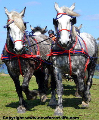 Spring Event of the Southern Counties Heavy Horse Association