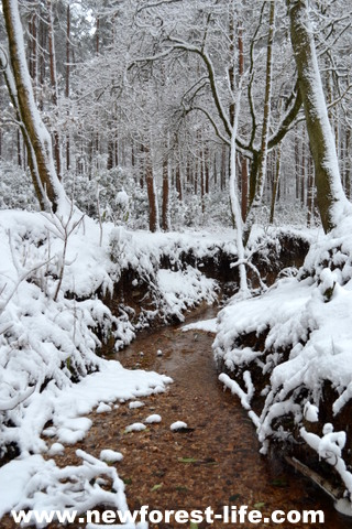 New Forest National Park snow scene.