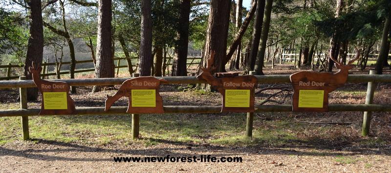 Bolderwood Deer Viewing Platform feeding area